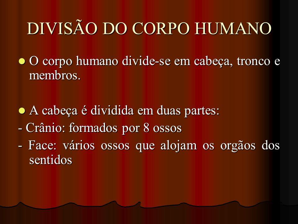 DIVISÃO DO CORPO HUMANO O corpo humano divide-se em cabeça, tronco e membros. O corpo humano divide-se em cabeça, tronco e membros. A cabeça é dividid