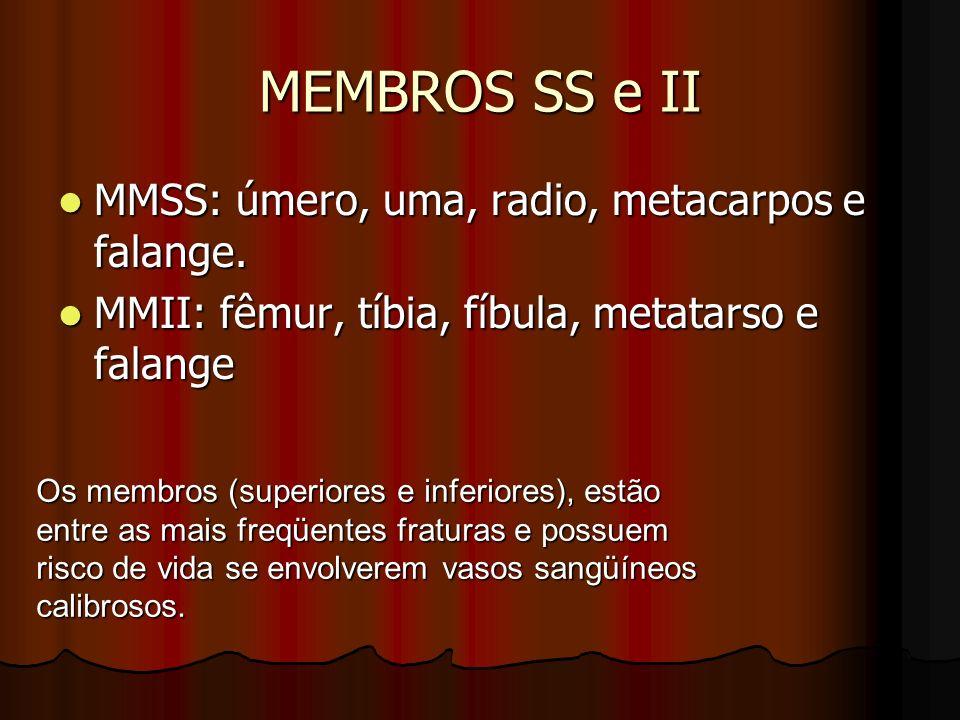 MEMBROS SS e II MMSS: úmero, uma, radio, metacarpos e falange. MMSS: úmero, uma, radio, metacarpos e falange. MMII: fêmur, tíbia, fíbula, metatarso e