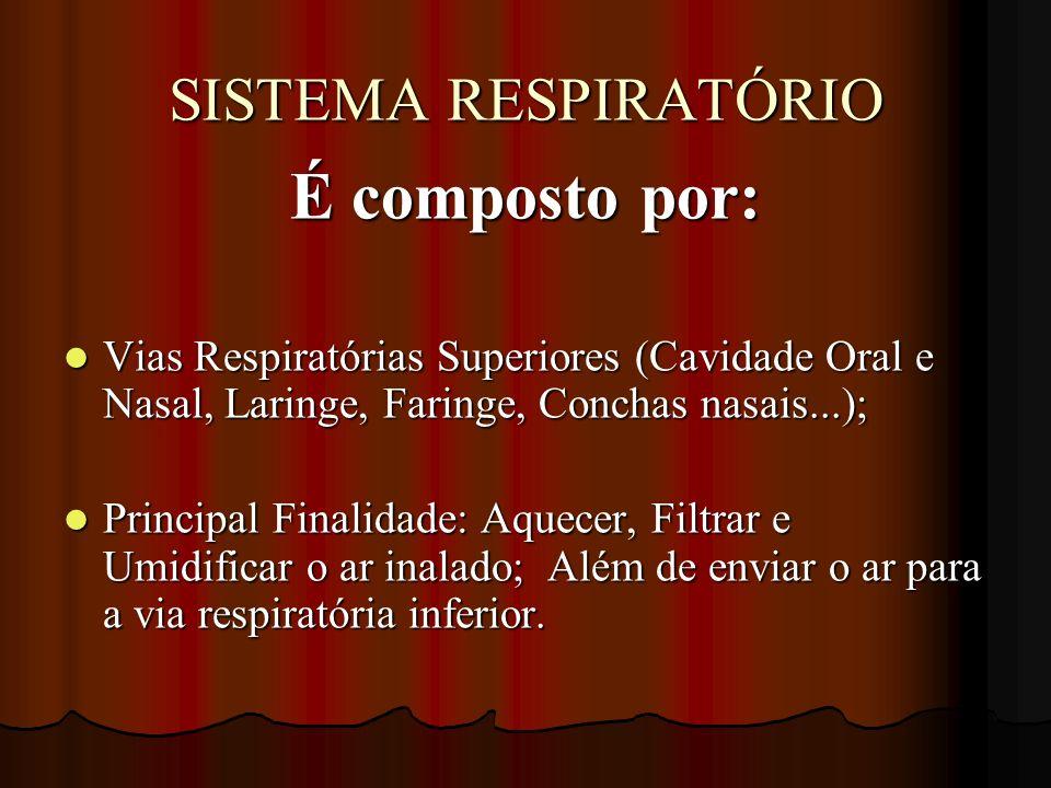 É composto por: Vias Respiratórias Superiores (Cavidade Oral e Nasal, Laringe, Faringe, Conchas nasais...); Vias Respiratórias Superiores (Cavidade Or