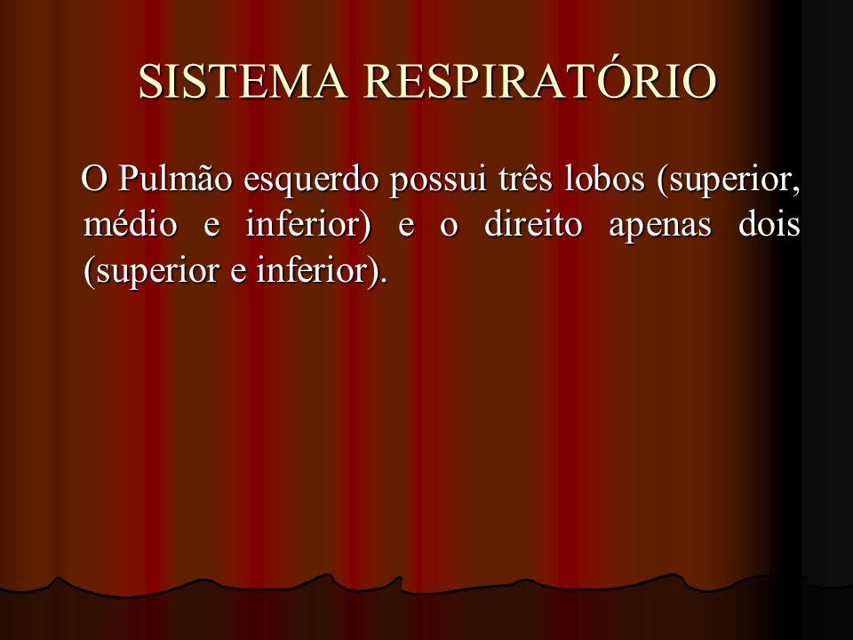 SISTEMA RESPIRATÓRIO O Pulmão esquerdo possui três lobos (superior, médio e inferior) e o direito apenas dois (superior e inferior). O Pulmão esquerdo