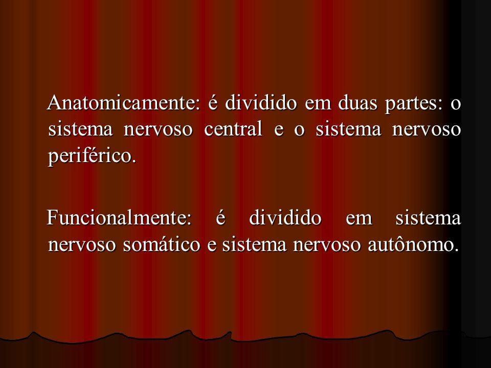 Anatomicamente: é dividido em duas partes: o sistema nervoso central e o sistema nervoso periférico. Anatomicamente: é dividido em duas partes: o sist
