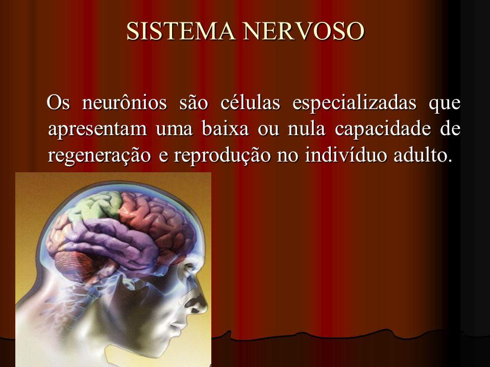 SISTEMA NERVOSO Os neurônios são células especializadas que apresentam uma baixa ou nula capacidade de regeneração e reprodução no indivíduo adulto. O