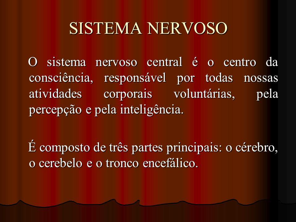 SISTEMA NERVOSO O sistema nervoso central é o centro da consciência, responsável por todas nossas atividades corporais voluntárias, pela percepção e p