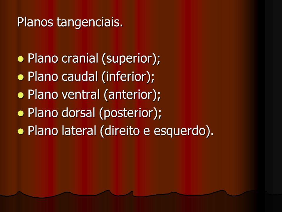 Planos tangenciais. Plano cranial (superior); Plano cranial (superior); Plano caudal (inferior); Plano caudal (inferior); Plano ventral (anterior); Pl