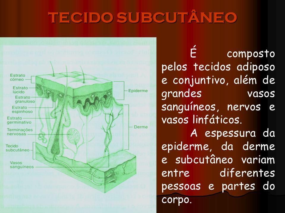 TECIDO SUBCUTÂNEO É composto pelos tecidos adiposo e conjuntivo, além de grandes vasos sanguíneos, nervos e vasos linfáticos. A espessura da epiderme,