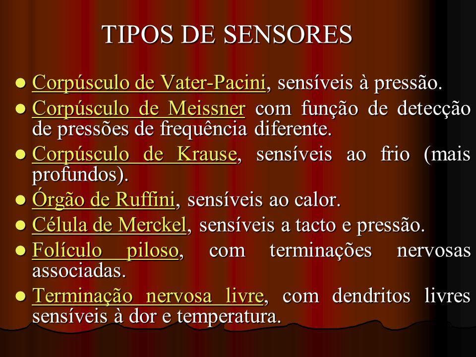TIPOS DE SENSORES TIPOS DE SENSORES Corpúsculo de Vater-Pacini, sensíveis à pressão. Corpúsculo de Vater-Pacini, sensíveis à pressão. Corpúsculo de Va