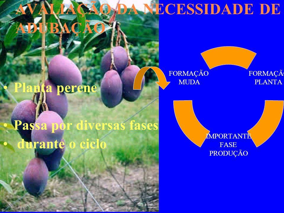AVALIAÇÃO DA NECESSIDADE DE ADUBAÇÃO Planta perene Passa por diversas fases durante o ciclo FORMAÇÃO PLANTA IMPORTANTE FASE PRODUÇÃO FORMAÇÃO MUDA