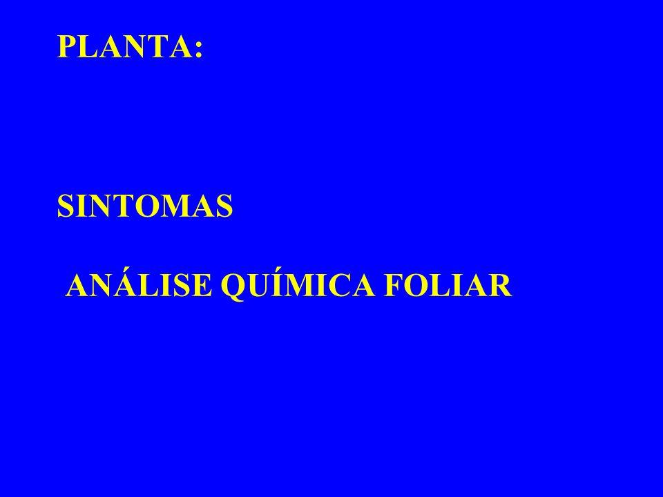 PLANTA: SINTOMAS ANÁLISE QUÍMICA FOLIAR