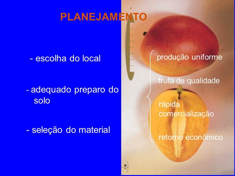 PLANEJAMENTO - escolha do local - adequado preparo do solo - seleção do material produção uniforme fruta de qualidade rápida comercialização retorno econômico
