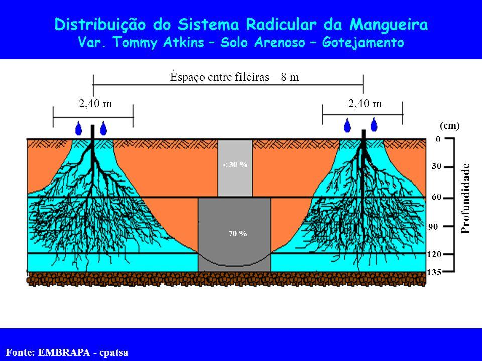 Espaço entre fileiras – 8 m 2,40 m < 30 % 70 % Profundidade 0 30 90 135 120 60 (cm) Distribuição do Sistema Radicular da Mangueira Var. Tommy Atkins –