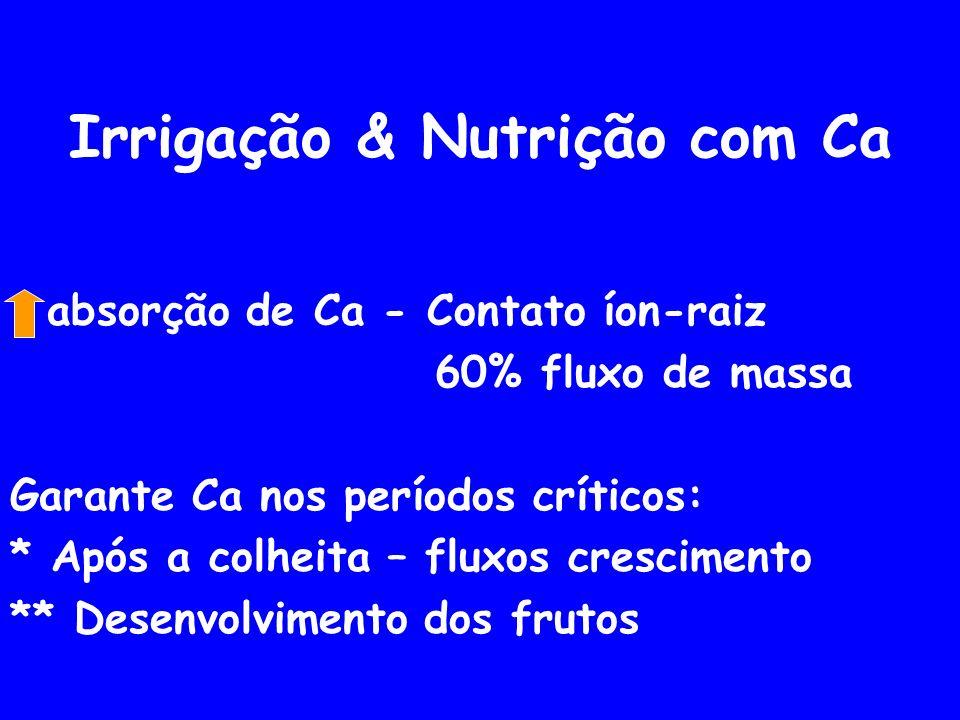 Irrigação & Nutrição com Ca absorção de Ca - Contato íon-raiz 60% fluxo de massa Garante Ca nos períodos críticos: * Após a colheita – fluxos crescimento ** Desenvolvimento dos frutos