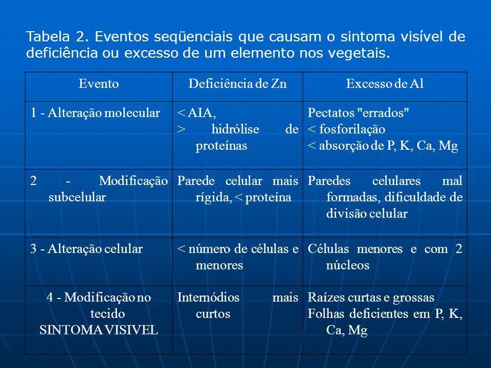 Tabela 2. Eventos seqüenciais que causam o sintoma visível de deficiência ou excesso de um elemento nos vegetais. EventoDeficiência de ZnExcesso de Al
