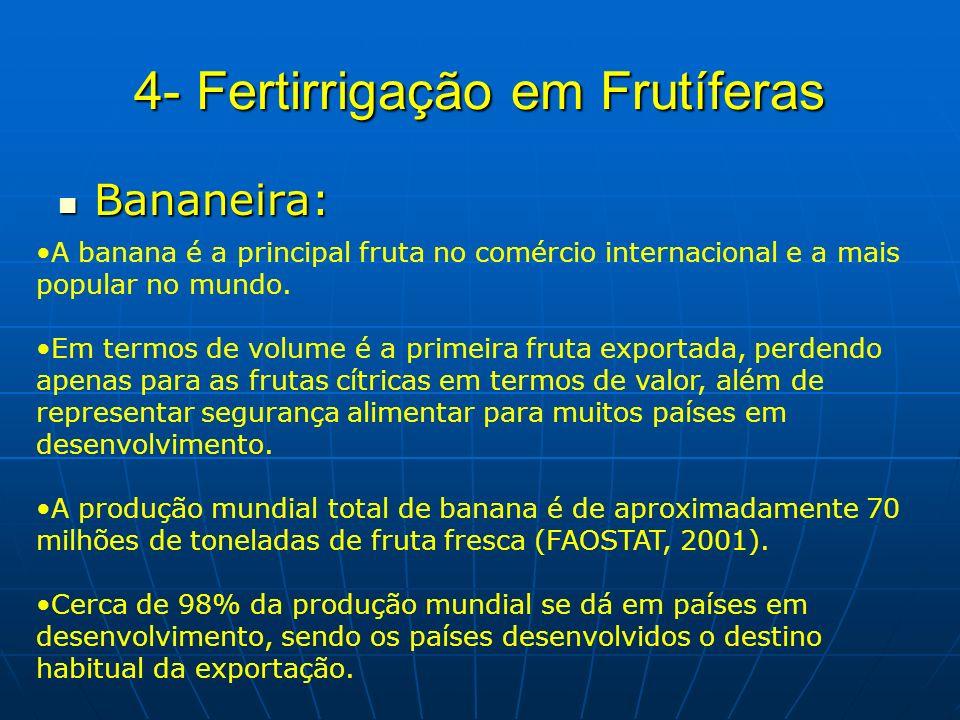 4- Fertirrigação em Frutíferas Bananeira: Bananeira: A banana é a principal fruta no comércio internacional e a mais popular no mundo. Em termos de vo
