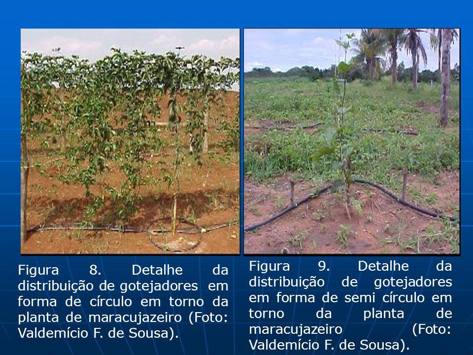 Figura 8. Detalhe da distribuição de gotejadores em forma de círculo em torno da planta de maracujazeiro (Foto: Valdemício F. de Sousa). Figura 9. Det