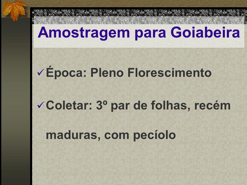 Amostragem para Goiabeira Época: Pleno Florescimento Coletar: 3º par de folhas, recém maduras, com pecíolo