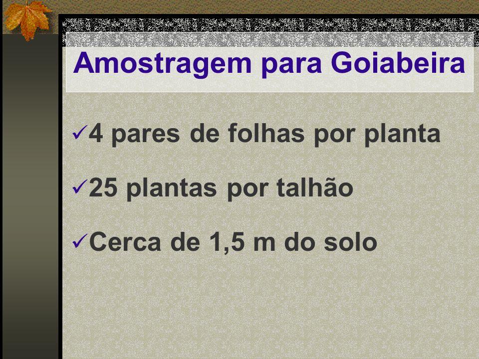 Amostragem para Goiabeira 4 pares de folhas por planta 25 plantas por talhão Cerca de 1,5 m do solo