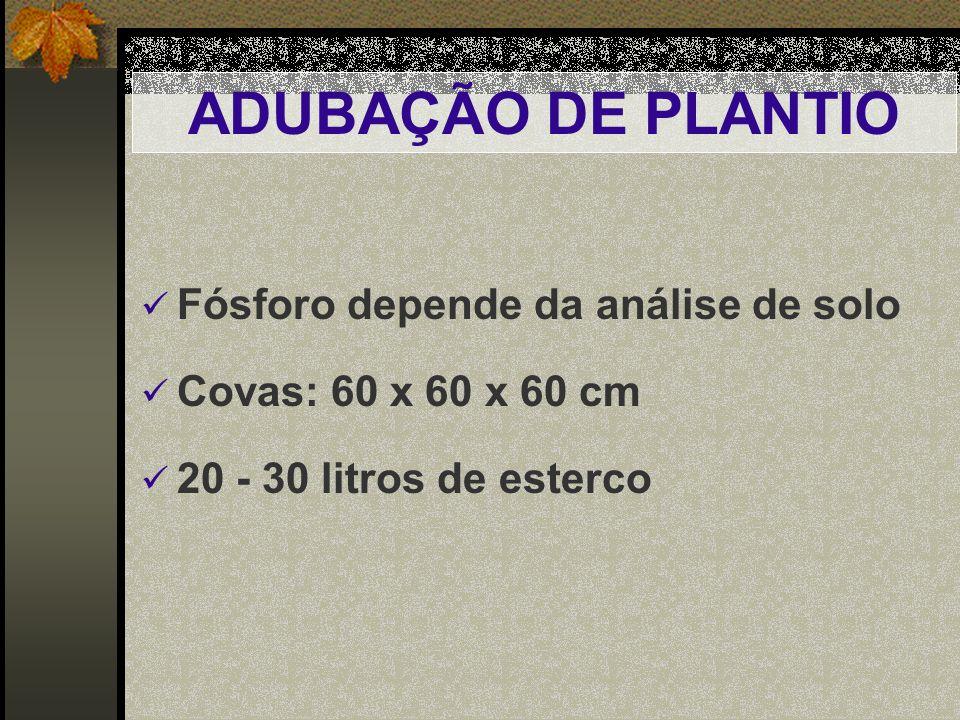 ADUBAÇÃO DE PLANTIO Fósforo depende da análise de solo Covas: 60 x 60 x 60 cm 20 - 30 litros de esterco