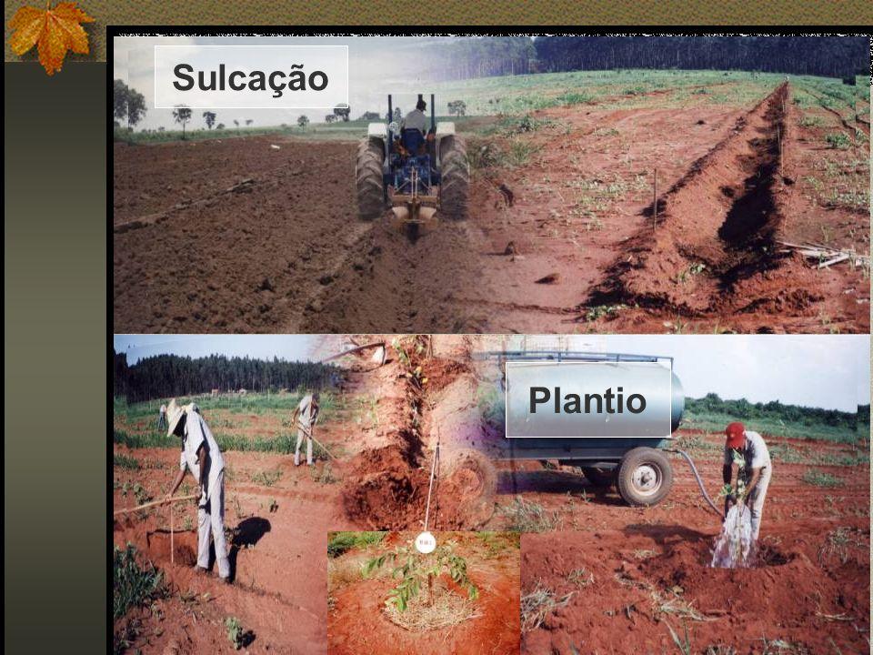 Plantio Sulcação