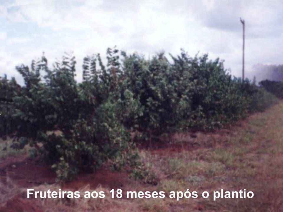 Fruteiras aos 18 meses após o plantio