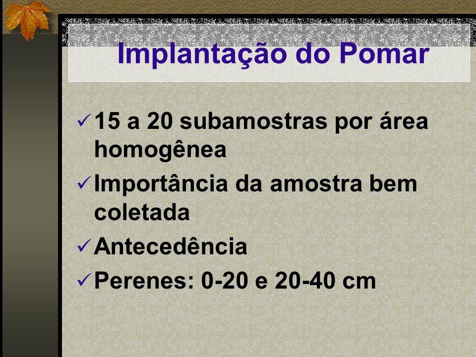 Implantação do Pomar 15 a 20 subamostras por área homogênea Importância da amostra bem coletada Antecedência Perenes: 0-20 e 20-40 cm