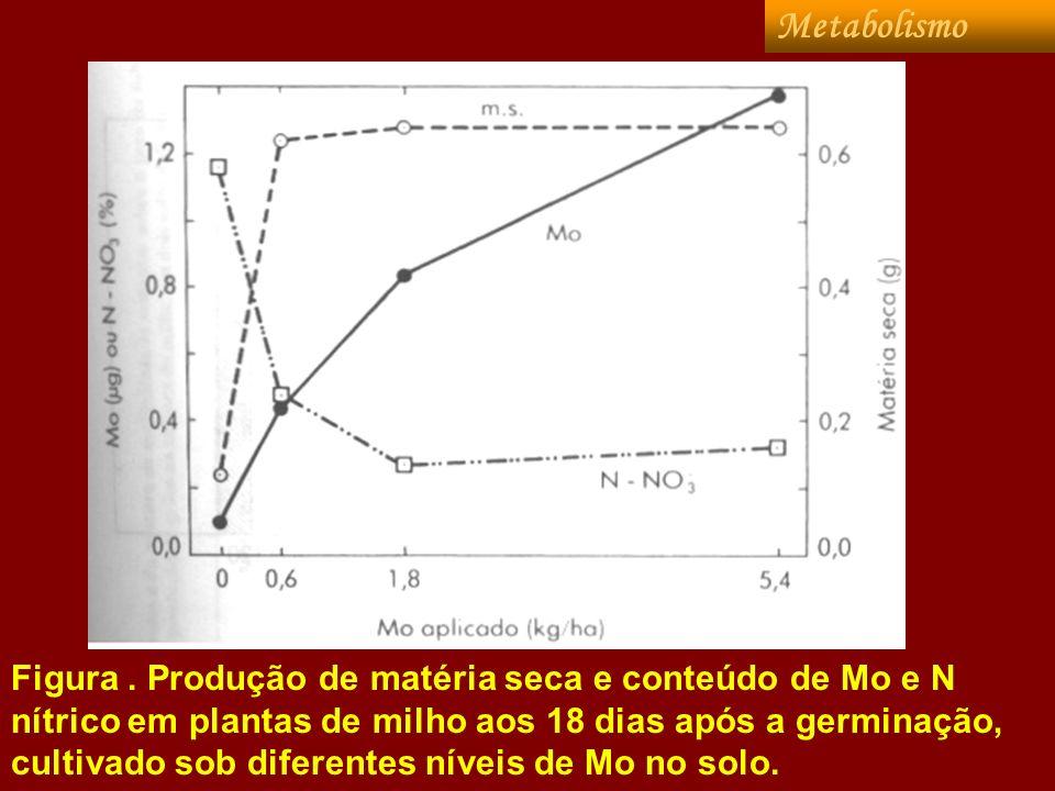 Figura. Produção de matéria seca e conteúdo de Mo e N nítrico em plantas de milho aos 18 dias após a germinação, cultivado sob diferentes níveis de Mo