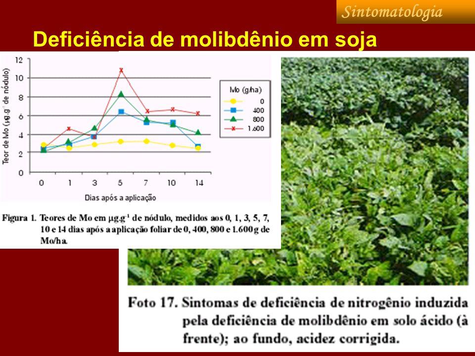 Deficiência de molibdênio em soja Sintomatologia