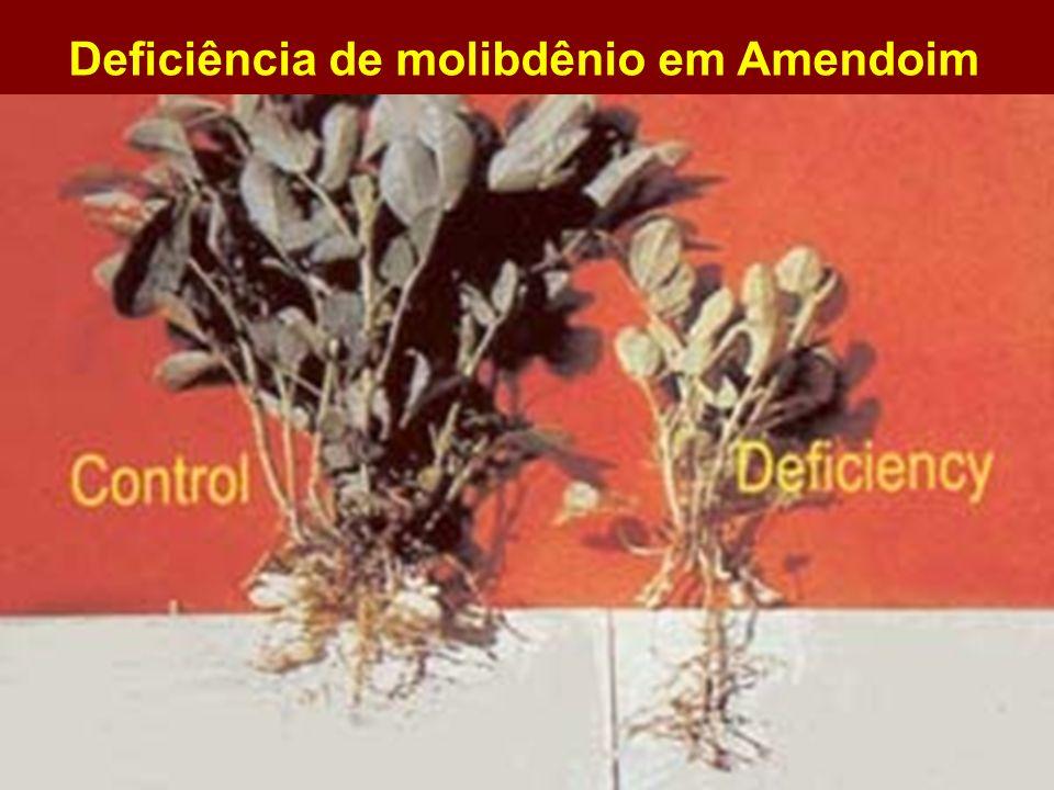 Deficiência de molibdênio em Amendoim