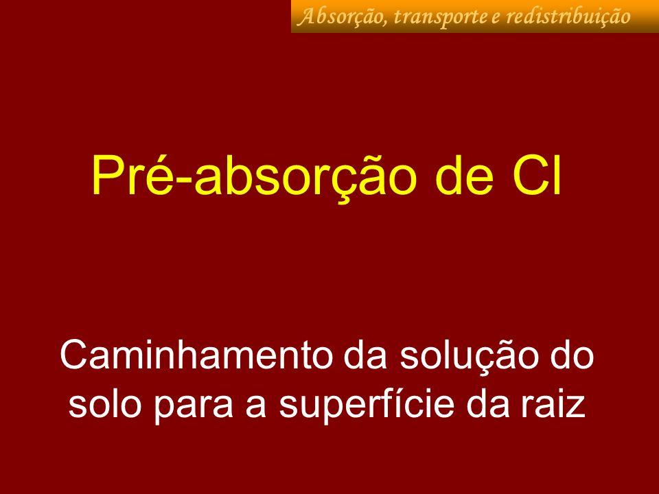 Formas absorvidas: Cl - Absorção, transporte e redistribuição