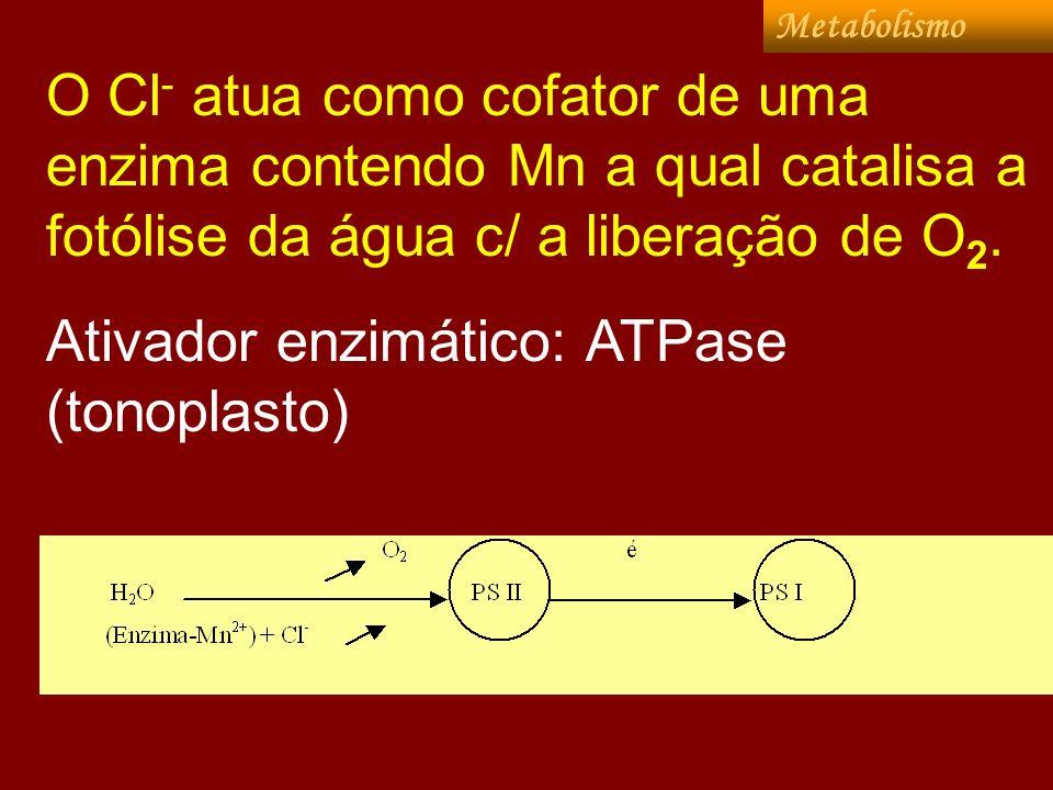 Outras funções: ** estímulo na ATPase (mantém pH citop.>7), localizada no tonoplasto; · ** inibição da síntese ou degradação de proteínas, visto que em plantas deficientes em Cl, tem-se aumento de aminoácidos e amidas; · ** estímulo na síntese de asparagina (sintetase da asparagina) e ativando outras enzimas (ATPases; pirofosfatases, atuam no metabolismo do N.