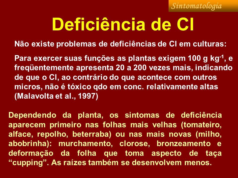 Deficiência de Cl Dependendo da planta, os sintomas de deficiência aparecem primeiro nas folhas mais velhas (tomateiro, alface, repolho, beterraba) ou