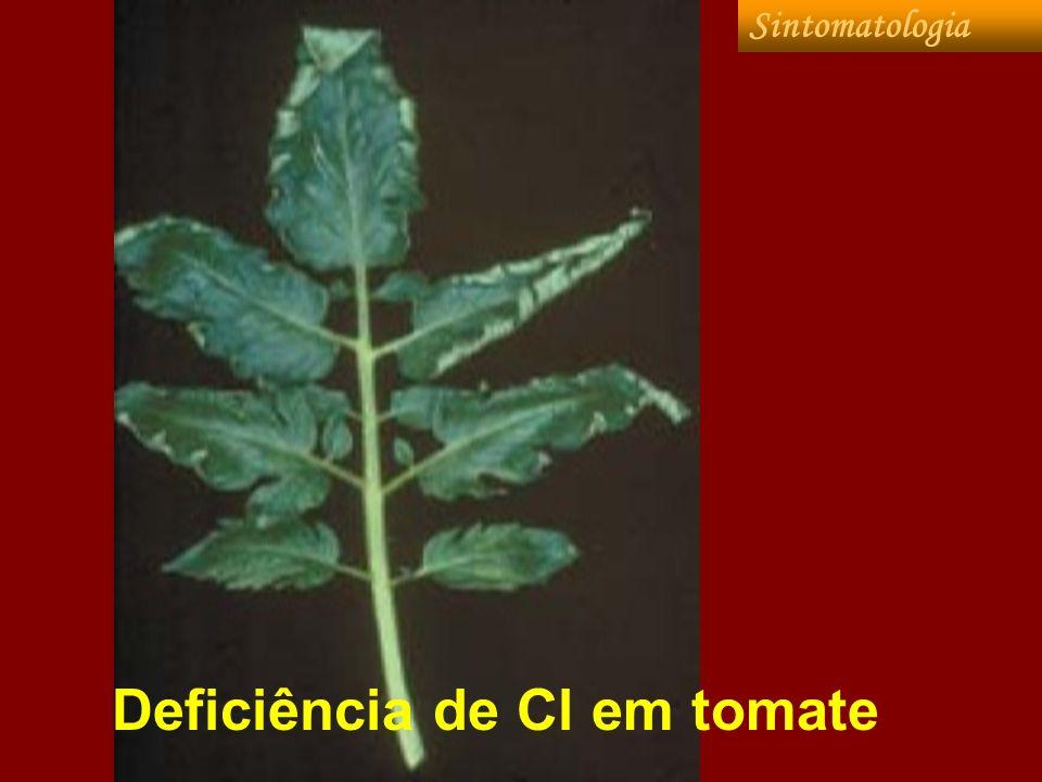 Excesso de Cl As culturas normalmente apresentam certa tolerância a altas concentrações de Cl, apresentando grandes diferenças genotípicas, sendo que na soja as plantas sensíveis (Paraná) acumulam grande quantidade do elemento (30.000 mg kg -1 ), enquanto as tolerantes, com mecanismos de exclusão de Cl, apresentam teores foliares bem menores (1000-2000 mg Cl por kg de matéria seca).