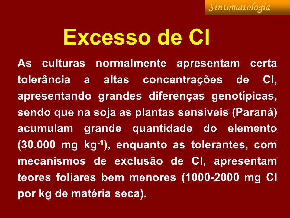 Excesso de Cl As culturas normalmente apresentam certa tolerância a altas concentrações de Cl, apresentando grandes diferenças genotípicas, sendo que
