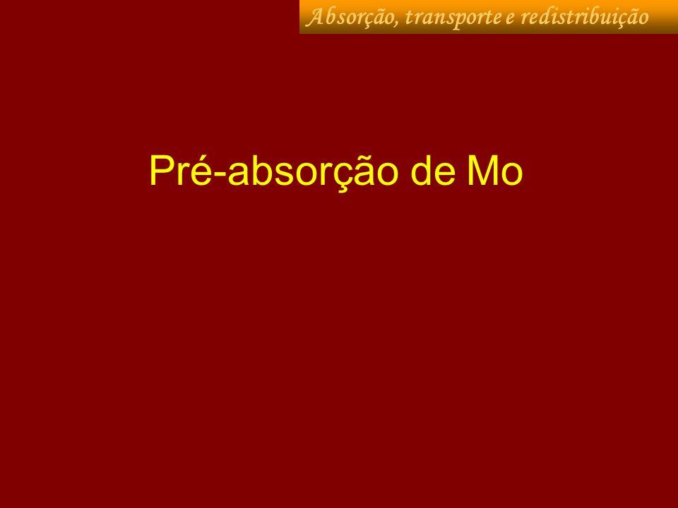 Pré-absorção de Mo Absorção, transporte e redistribuição
