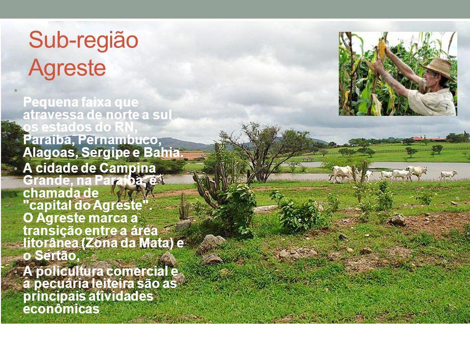 Sub-região Agreste Pequena faixa que atravessa de norte a sul os estados do RN, Paraíba, Pernambuco, Alagoas, Sergipe e Bahia. A cidade de Campina Gra