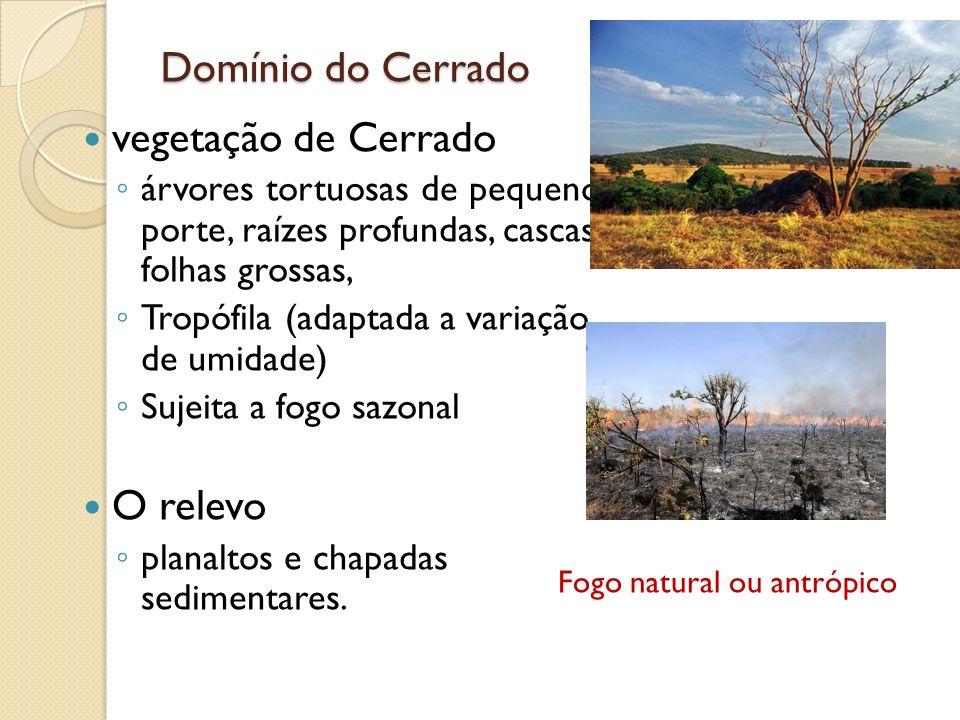 Domínio do Cerrado vegetação de Cerrado árvores tortuosas de pequeno porte, raízes profundas, cascas e folhas grossas, Tropófila (adaptada a variação