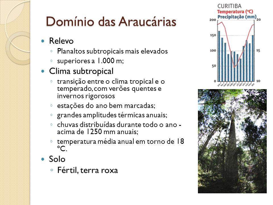 Domínio das Araucárias Relevo Planaltos subtropicais mais elevados superiores a 1.000 m; Clima subtropical transição entre o clima tropical e o temper