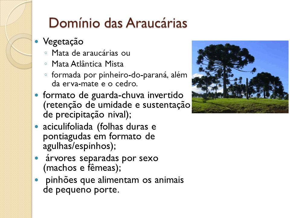 Domínio das Araucárias Vegetação Mata de araucárias ou Mata Atlântica Mista formada por pinheiro-do-paraná, além da erva-mate e o cedro. formato de gu