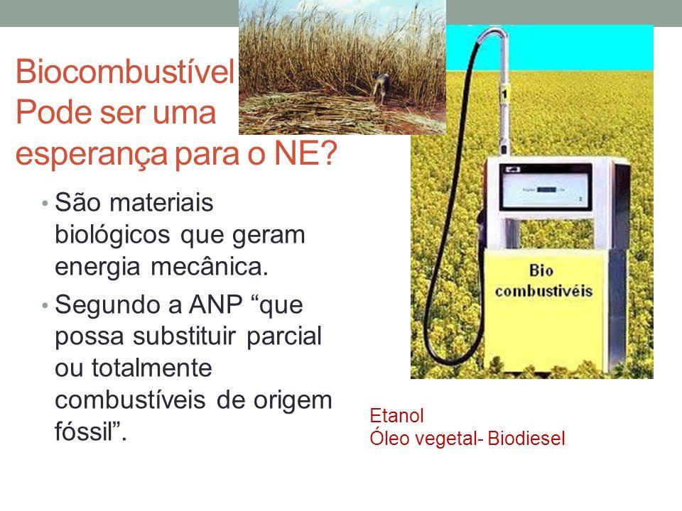 Biocombustível Pode ser uma esperança para o NE.