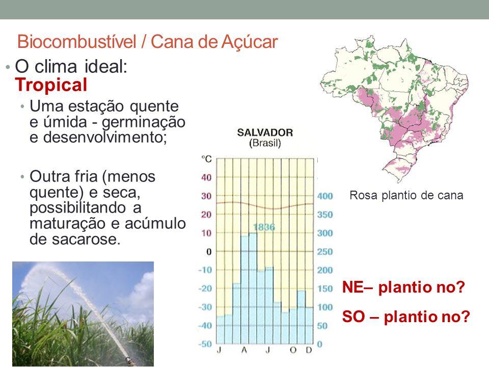 Biocombustível / Cana de Açúcar O clima ideal: Tropical Uma estação quente e úmida - germinação e desenvolvimento; Outra fria (menos quente) e seca, possibilitando a maturação e acúmulo de sacarose.