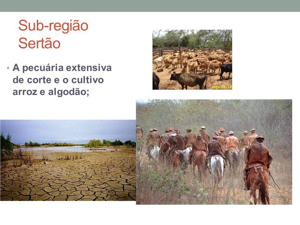 Sub-região Sertão A pecuária extensiva de corte e o cultivo arroz e algodão;