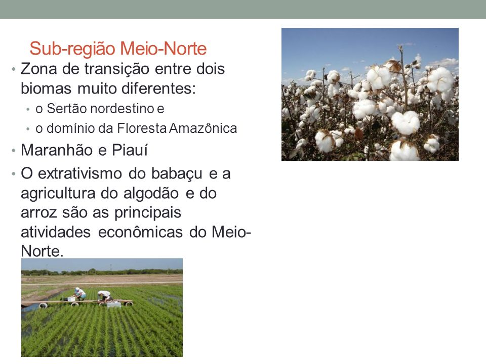 Sub-região Meio-Norte Zona de transição entre dois biomas muito diferentes: o Sertão nordestino e o domínio da Floresta Amazônica Maranhão e Piauí O extrativismo do babaçu e a agricultura do algodão e do arroz são as principais atividades econômicas do Meio- Norte.