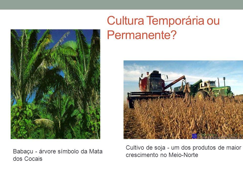 Cultura Temporária ou Permanente.