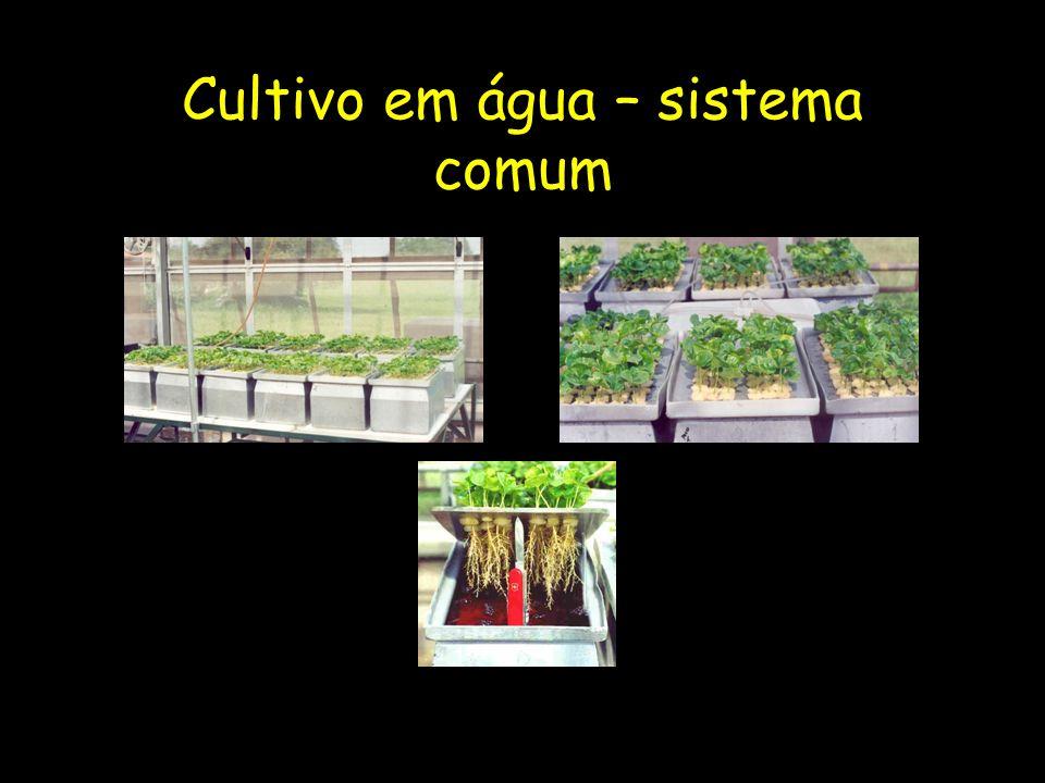 Cultivo em água – sistema comum