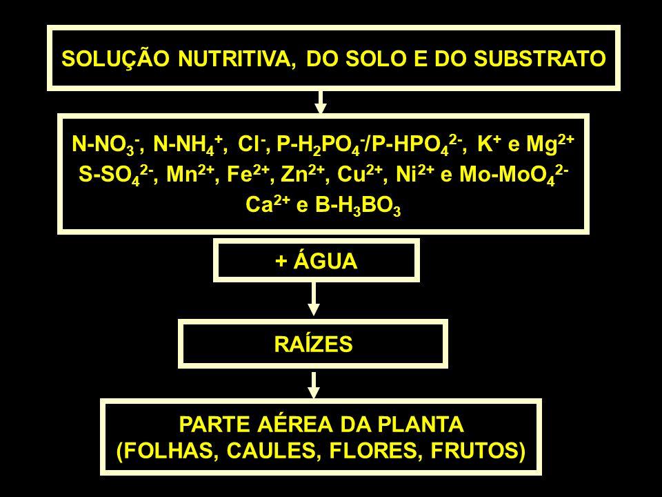 SOLUÇÃO NUTRITIVA, DO SOLO E DO SUBSTRATO + ÁGUA RAÍZES PARTE AÉREA DA PLANTA (FOLHAS, CAULES, FLORES, FRUTOS) N-NO 3 -, N-NH 4 +, Cl -, P-H 2 PO 4 -