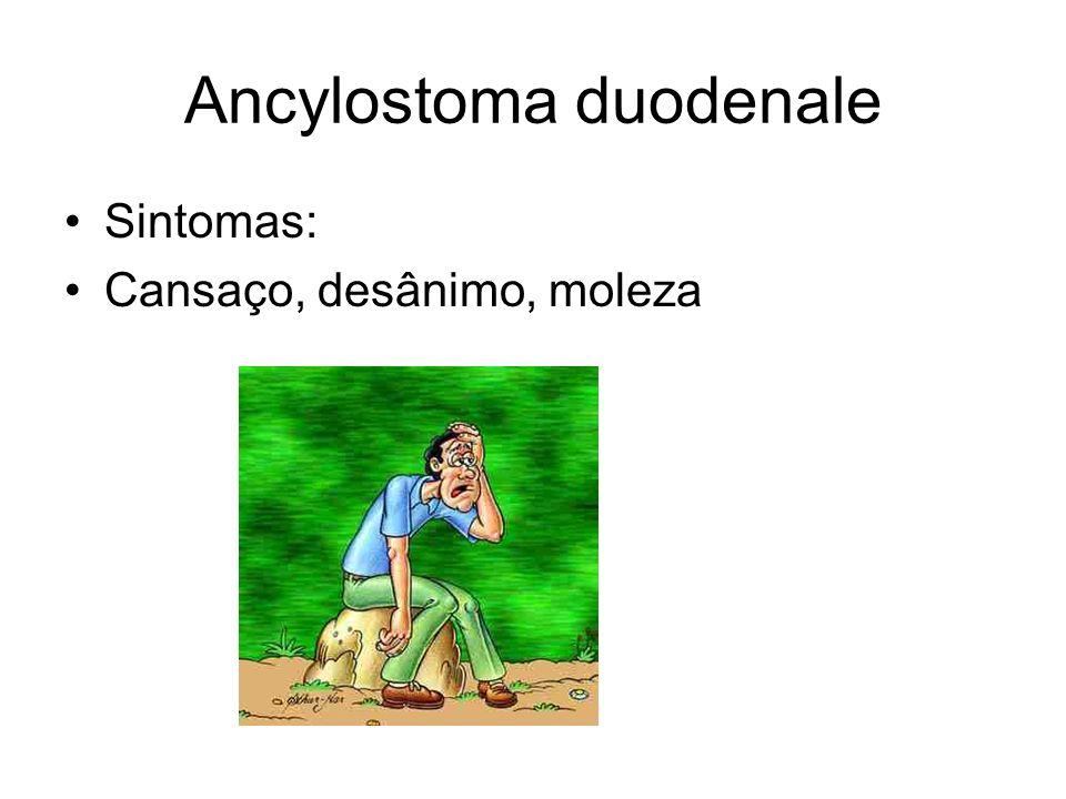 Ancylostoma duodenale Sintomas: Cansaço, desânimo, moleza