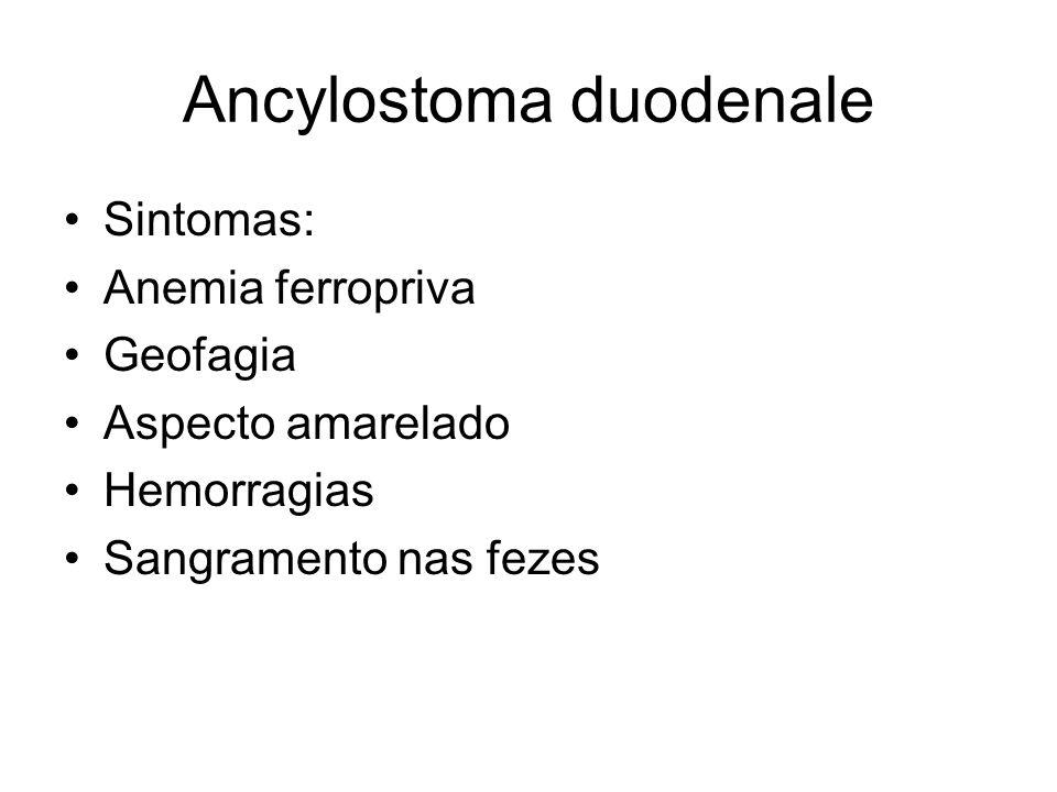 Ancylostoma duodenale Sintomas: Anemia ferropriva Geofagia Aspecto amarelado Hemorragias Sangramento nas fezes