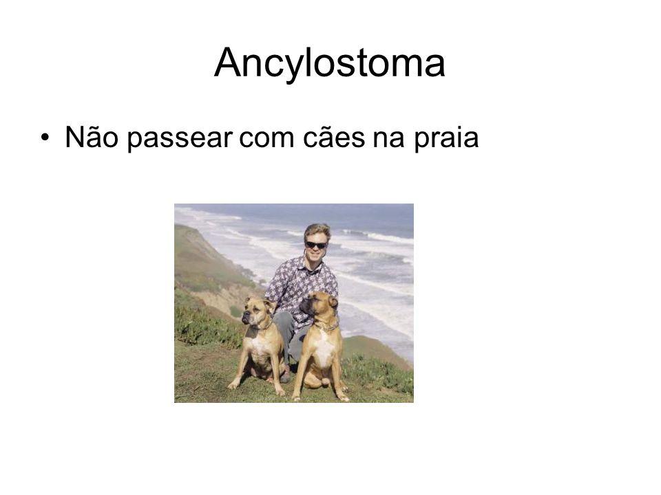 Ancylostoma Não passear com cães na praia