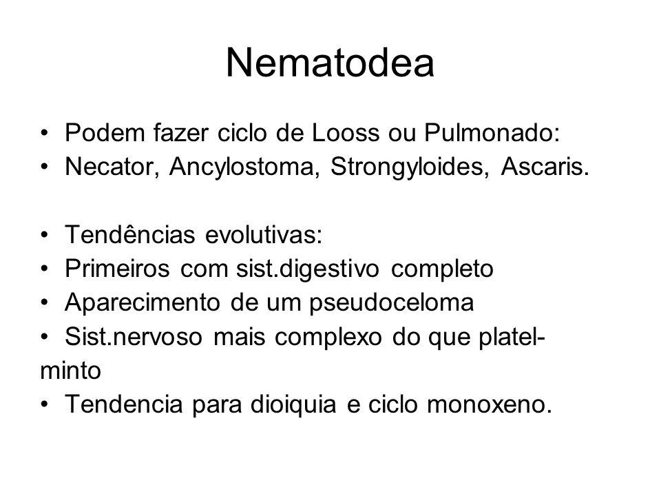 Nematodea Podem fazer ciclo de Looss ou Pulmonado: Necator, Ancylostoma, Strongyloides, Ascaris. Tendências evolutivas: Primeiros com sist.digestivo c