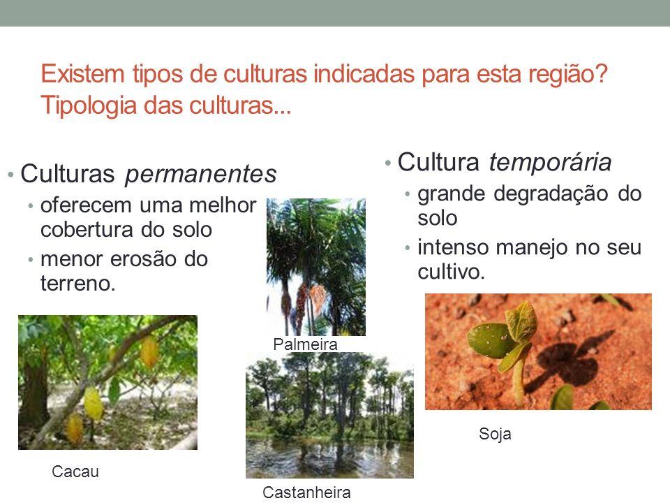 Existem tipos de culturas indicadas para esta região? Tipologia das culturas... Culturas permanentes oferecem uma melhor cobertura do solo menor erosã