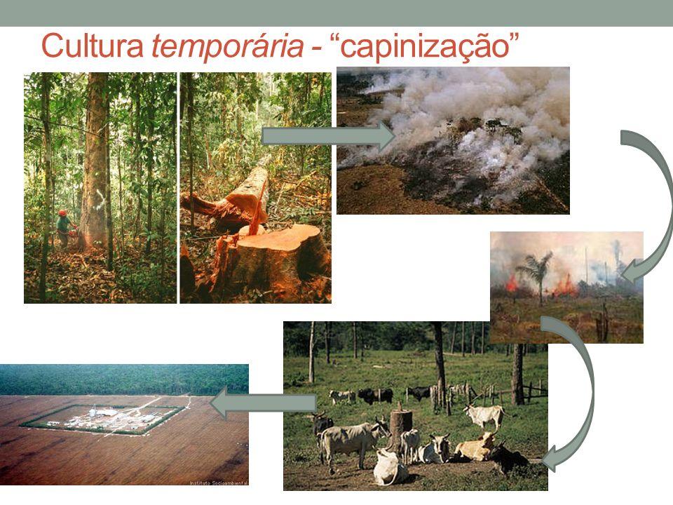 Cultura temporária - capinização